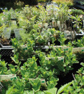 Kräutergarten anlegen – leicht gemacht