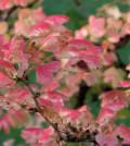 Letzte Herbstarbeiten im Garten