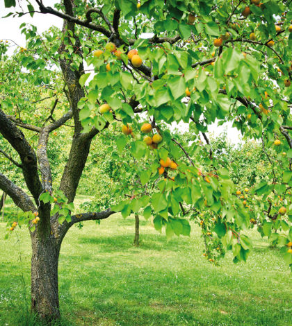 Foto: tepic - depositphotos.com